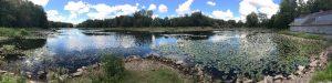 flattail-lake