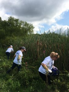 Curbell volunteers removing invasive plants
