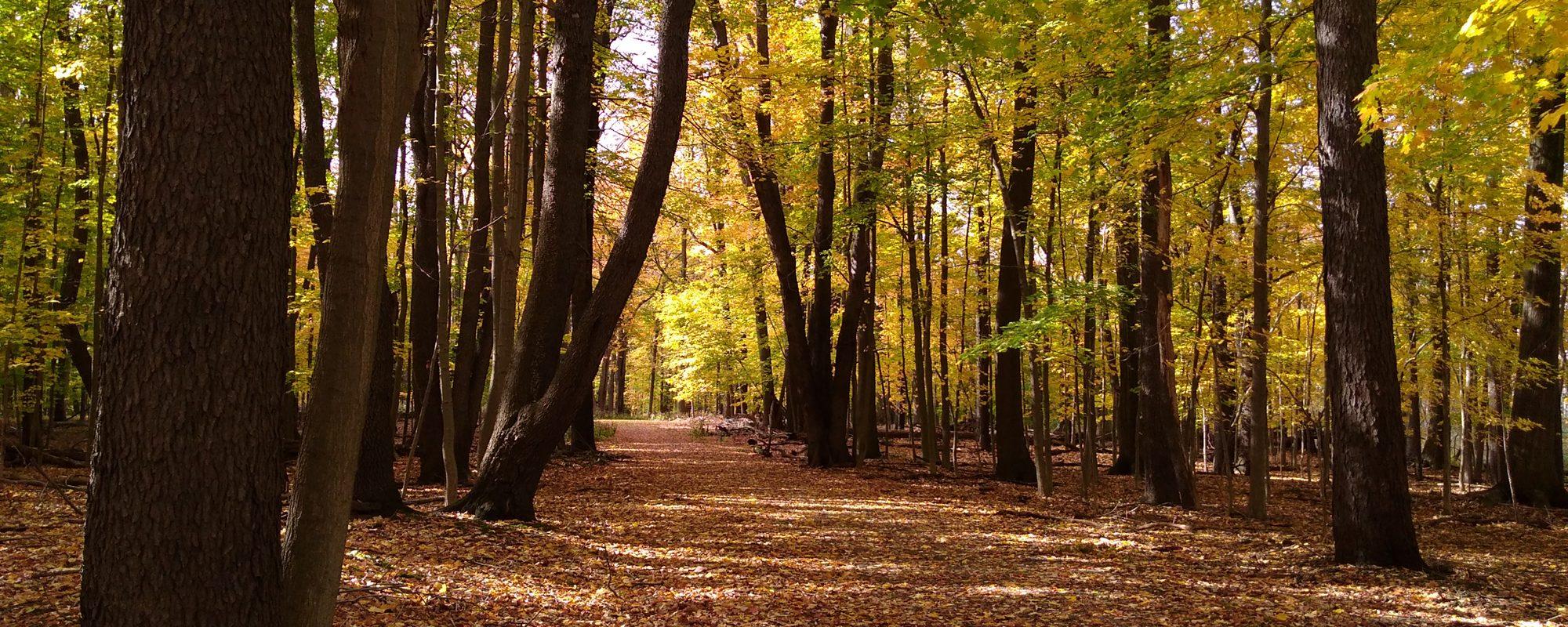 Reinstein Woods Nature Preserve Depew Ny